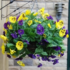 30cm Pansy Ball Artificial Hanging Basket