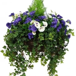 40cm Large Purple & White Pansy Artificial Hanging Basket