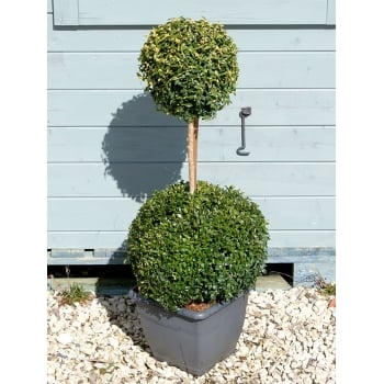 85cm Topiary Double Ball-Top with LED Lights