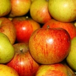 Apple Coxs O. Pippin SF M27