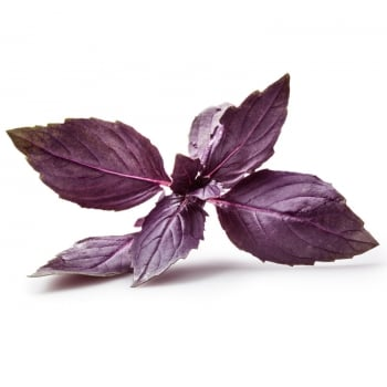Basil Purple