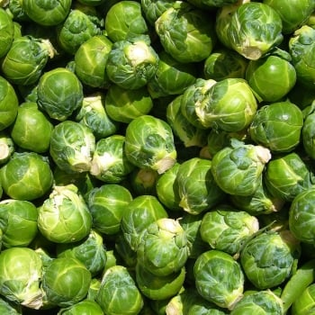 Brussel Sprouts (8 cell plastic pack x 6)