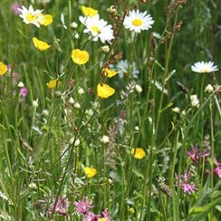 Clay, Heavy Soils Perennial Wildflower Seeds
