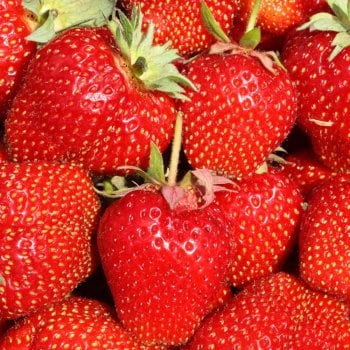 Craigmarloch Cambridge Favourite Strawberries Carry 6 Pack