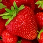 Hapil Strawberries Carry 6 Pack
