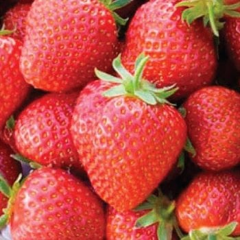 Craigmarloch Honeoye Strawberries Carry 6 Pack