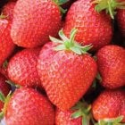 Honeoye Strawberries Carry 6 Pack
