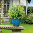 Box Leaf Effect Topiary Ball 30cm