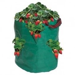 52L Strawberry/Herb Bag