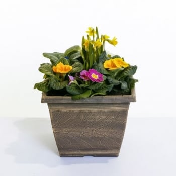 Harvest Square Primrose Planter 26cm