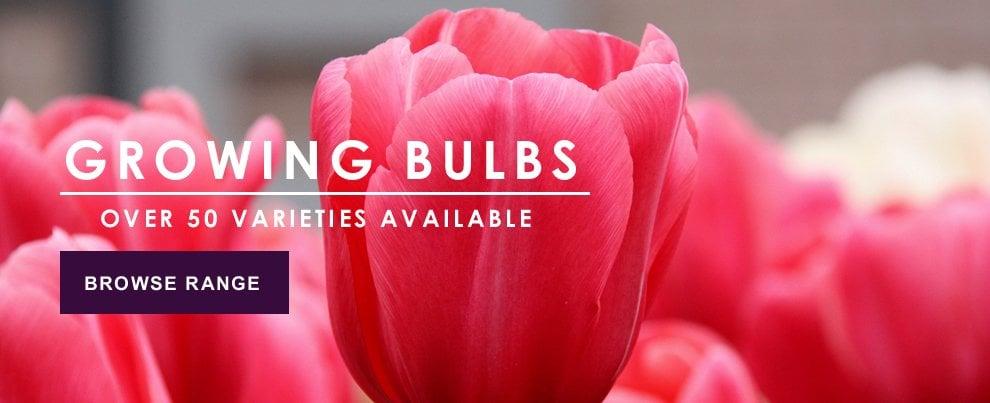Growing Bulbs
