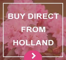 Holland Direct