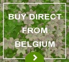 Belgium Direct