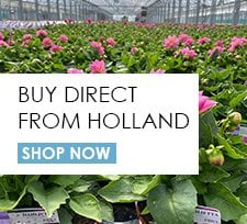 Holland Direct