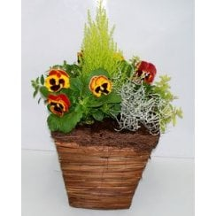 Square Brushwood Planter 11""