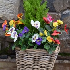 Mixed Pansy Artificial Rattan Floor Planter 30cm
