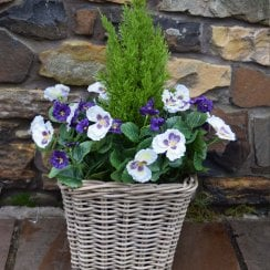Purple & White Pansy Artificial Rattan Floor Planter 30cm