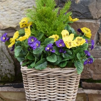 Tree Locate Purple & Yellow Pansy Artificial Rattan Floor Planter 30cm