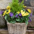 Purple & Yellow Pansy Artificial Rattan Floor Planter 30cm