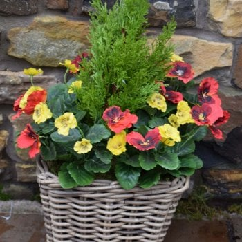 Tree Locate Red & Yellow Rattan Pansy Floor Planter  30cm