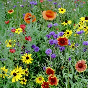 Wild Flowers - Our Selection